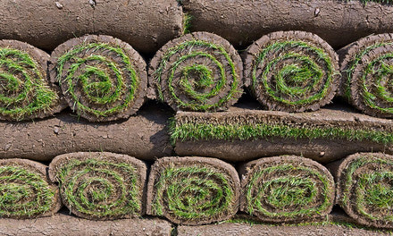 Sod, Seed & Fertilizer